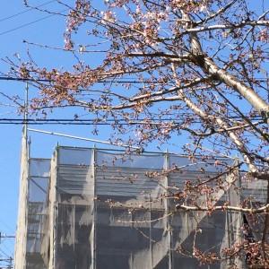 暖かくなると現場も急ピッチで進行|明石市東野町の注文住宅 無添加住宅専門店モスハウス田端