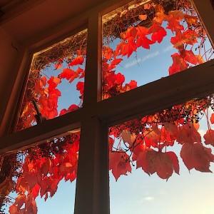 窓の外の紅葉